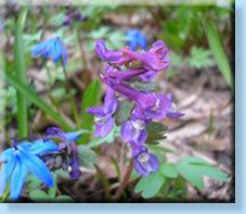 Стих о звуках весны