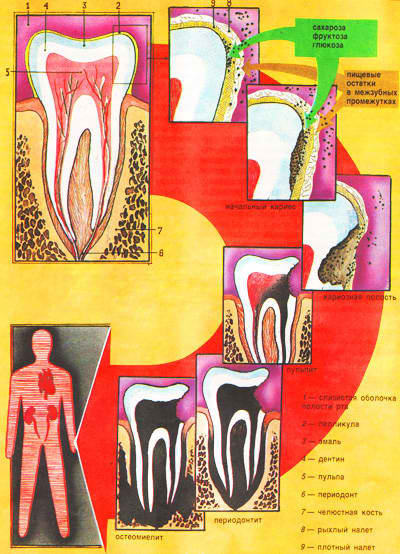 лекарство юнидокс от паразитов