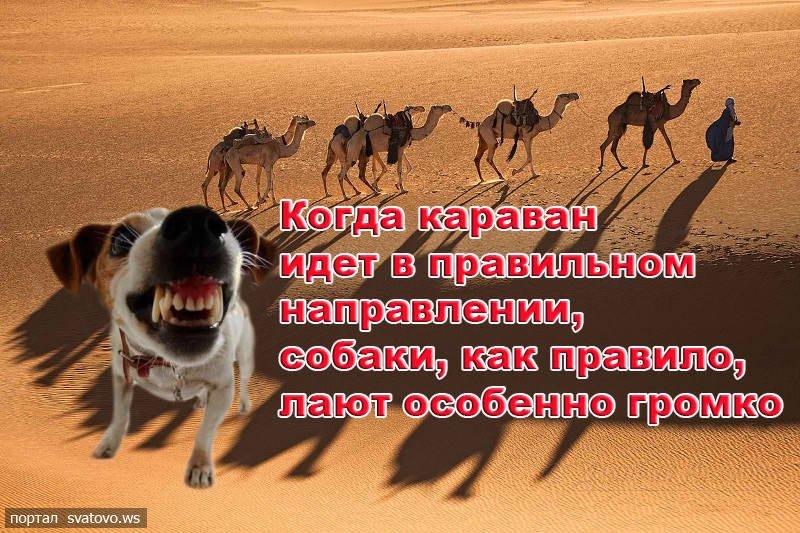 http://svatovo.ws/pic/news/big_4_2013522997a182c4.jpg