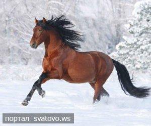 Чи потрібні Сватовому коні?.