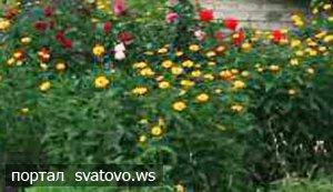 Прибрали територію, висадили квіти. Новини Голос Громади
