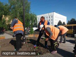 5000 петуній висаджені  на вулицях Сватового. Новини Голос Громади