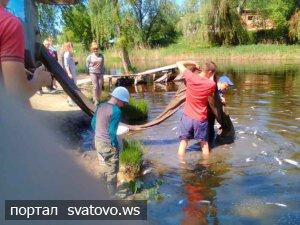 Зариблення річки Красна. Сватівська Міська Рада